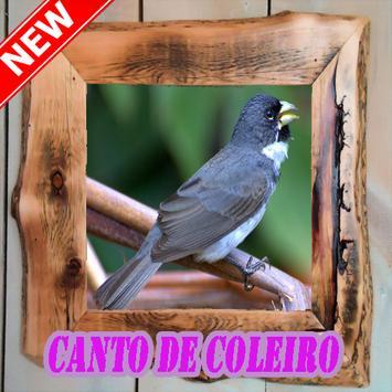 Cantos De Coleiro 2018 New poster