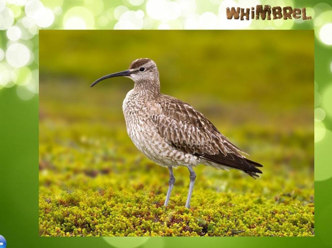 Alaska birds songs par...