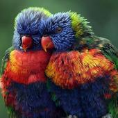 Rainbow Lorikeet Wallpapers icon
