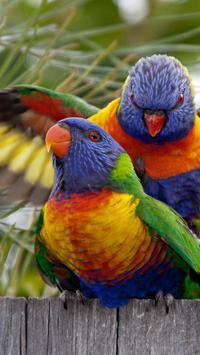 Rainbow Lorikeet Wallpapers screenshot 14