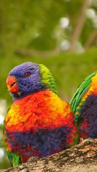 Rainbow Lorikeet Wallpapers screenshot 2