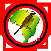 Canto de Passaros Brazil Completo icon