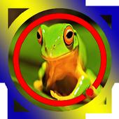 Kodok Ngorek icon