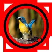 Suara Burung Tledekan icon