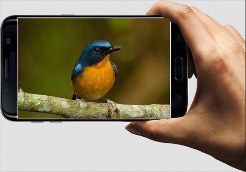 Suara Burung Tledekan apk screenshot