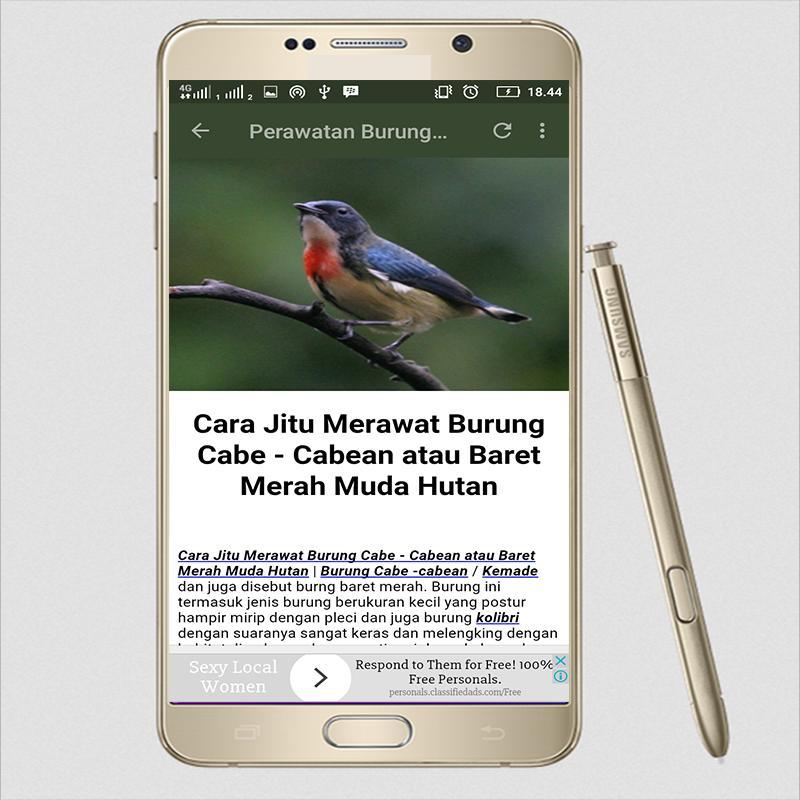Suara Burung Cabai Kemade For Android Apk Download