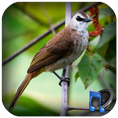 chirping Trucukan icon