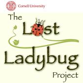 Lost Ladybug icon