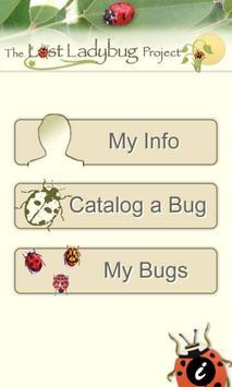 Lost Ladybug poster