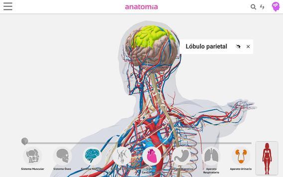Anatomía 360 screenshot 4