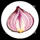 Onion Search Engine APK