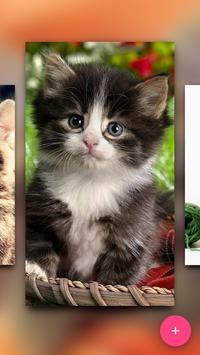 Match the Cat poster