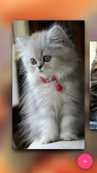 Match the Cat apk screenshot