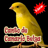 Cantos De Canario Belga Mp3 icon