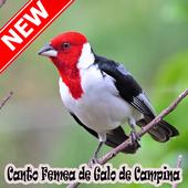 Cantos Femea Galo De Campina Naturale Mp3 icon