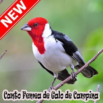 Cantos Femea Galo De Campina Naturale Mp3 poster
