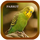 Suara Burung Parkit Offline icon