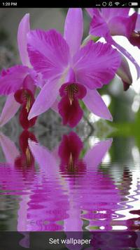 Orchid Live Wallpaper screenshot 11