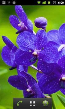 Orchids Wallpaper apk screenshot
