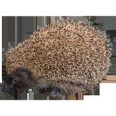 Hedgehog Sticker icon