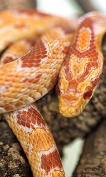 orange snake live wallpaper poster