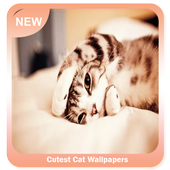 Cutest Cat Wallpapers icon