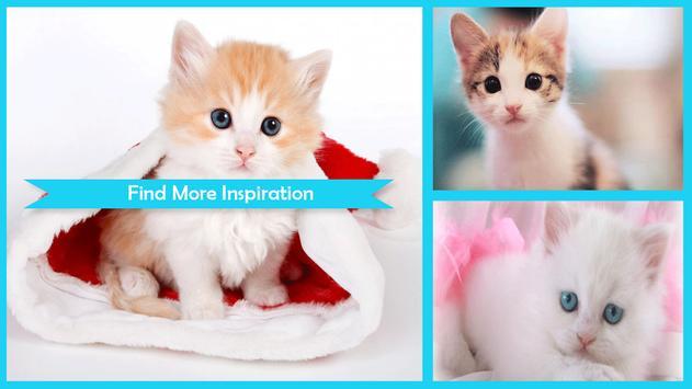 Cutest Cat Wallpapers screenshot 4