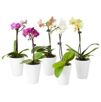 Ornamental plants poster