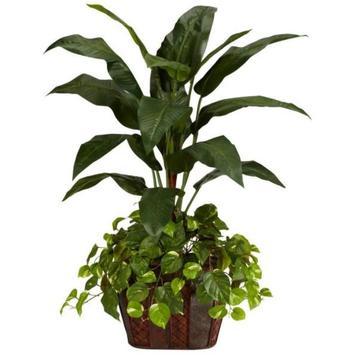 Ornamental plants screenshot 3