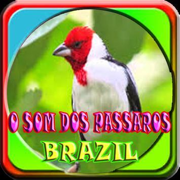 O som dos passaros do Brasil poster