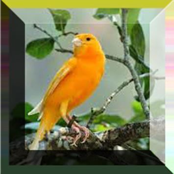 O Som Dos Pássaros 2 apk screenshot