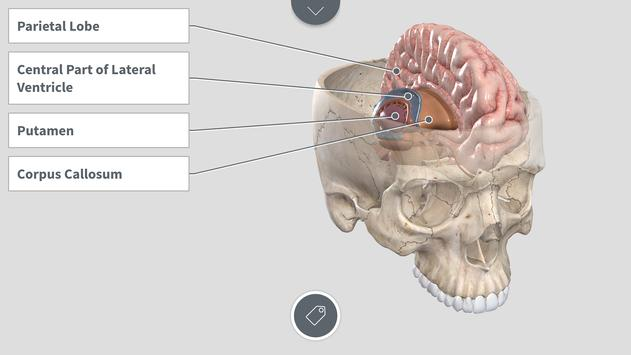 Complete Anatomy 2018 for Android screenshot 2