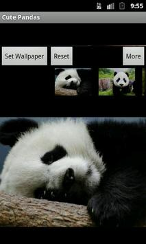 Cute Pandas wallpaper poster