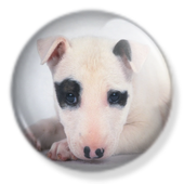 Cute Puppies Wallpaper icon