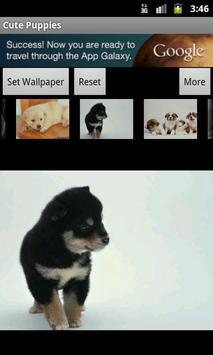 Cute Puppies Wallpaper screenshot 5