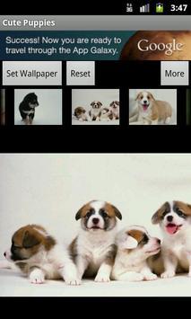 Cute Puppies Wallpaper screenshot 6