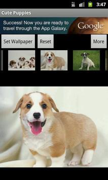 Cute Puppies Wallpaper screenshot 7