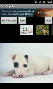 Cute Puppies Wallpaper poster