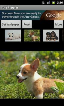 Cute Puppies Wallpaper screenshot 1
