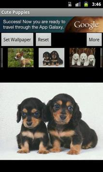 Cute Puppies Wallpaper screenshot 2