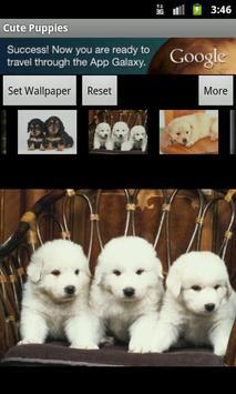 Cute Puppies Wallpaper screenshot 3