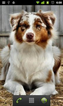 australian shepherd dogs apk screenshot