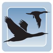 Motorport Bayside icon