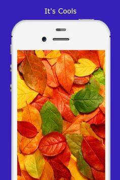 Autumn Wallpaper HD screenshot 4