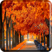 Autumn Wallpapers for Chat icon