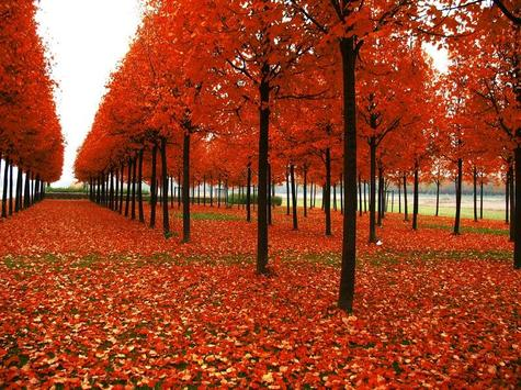Autumn Wallpapers for Chat apk screenshot