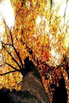 Autumns Nature Backgrounds apk screenshot