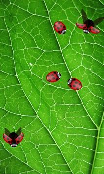 Ladybird Wallpaper poster