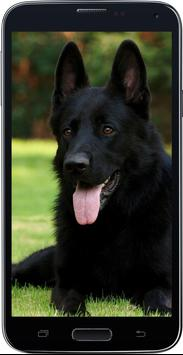HD Amazing German Shepherd Wallpapers • Pets Dogs screenshot 3