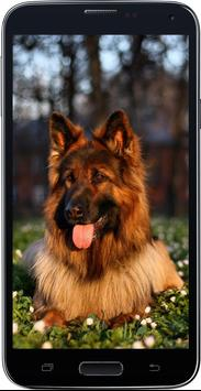 HD Amazing German Shepherd Wallpapers • Pets Dogs screenshot 1